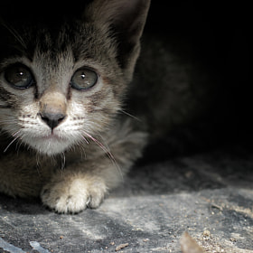 Fear kitten by Thee Tosayanond (thee)) on 500px.com