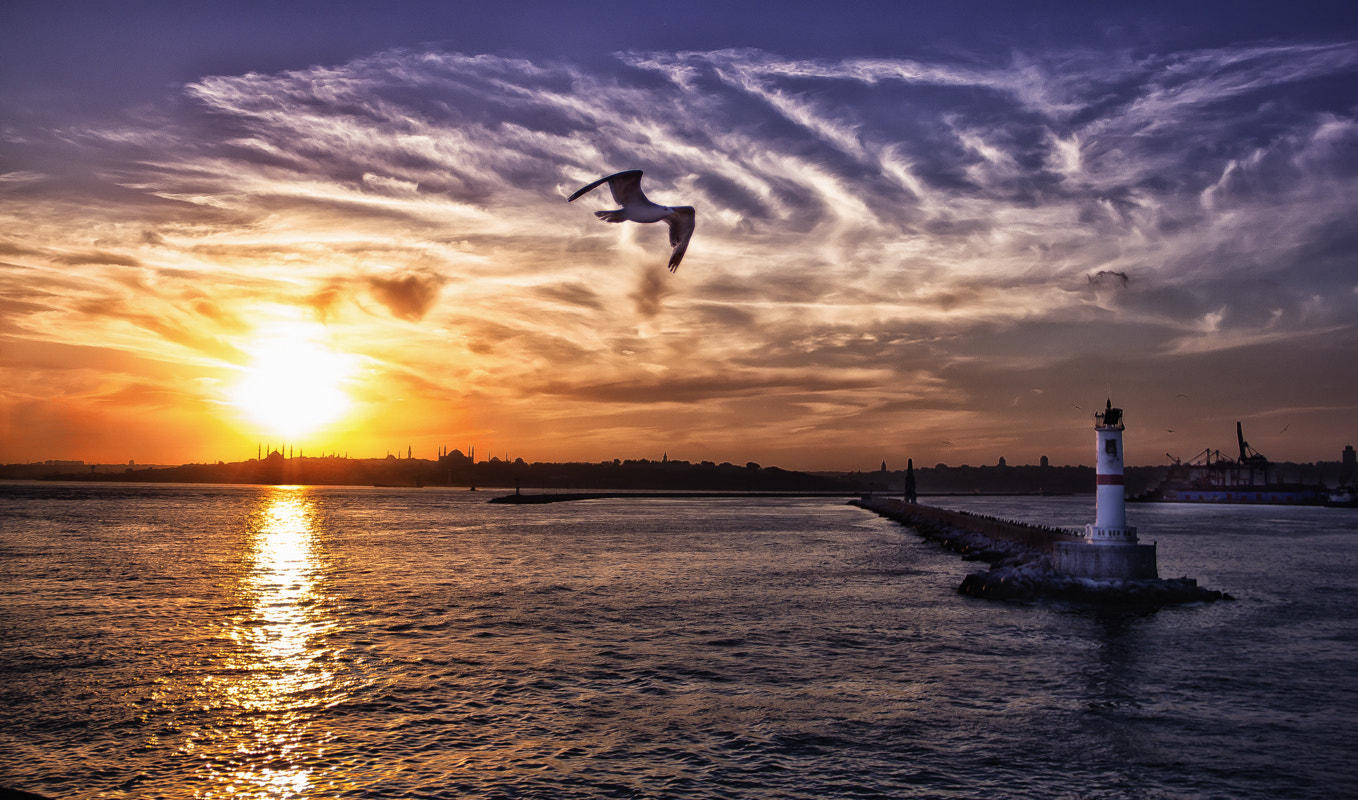 Photograph Wings by Mehmet Ali on 500px