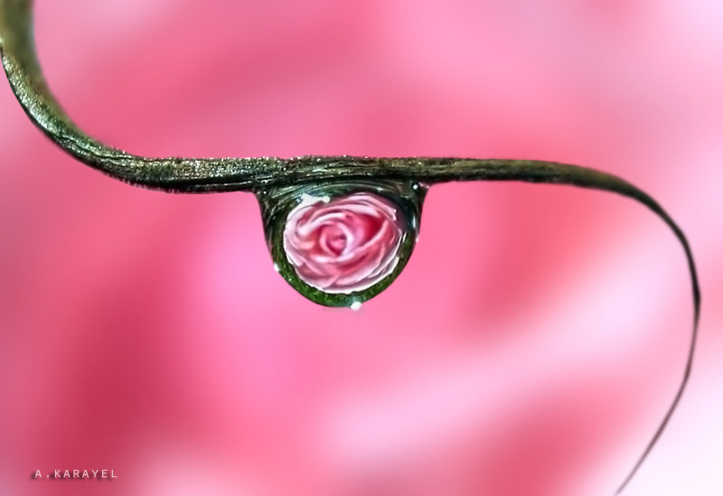 Photograph A drop of happiness.. by karayelim on 500px