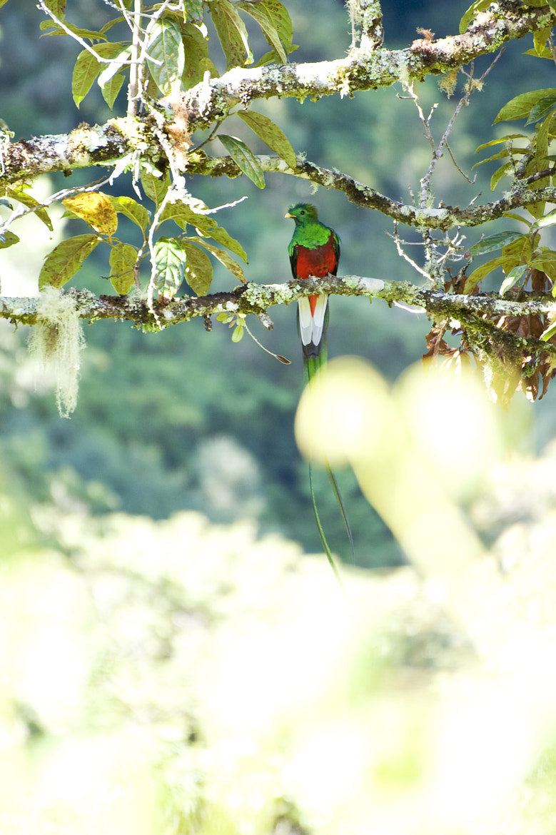 Photograph Quetzal by Laura de Graaff on 500px