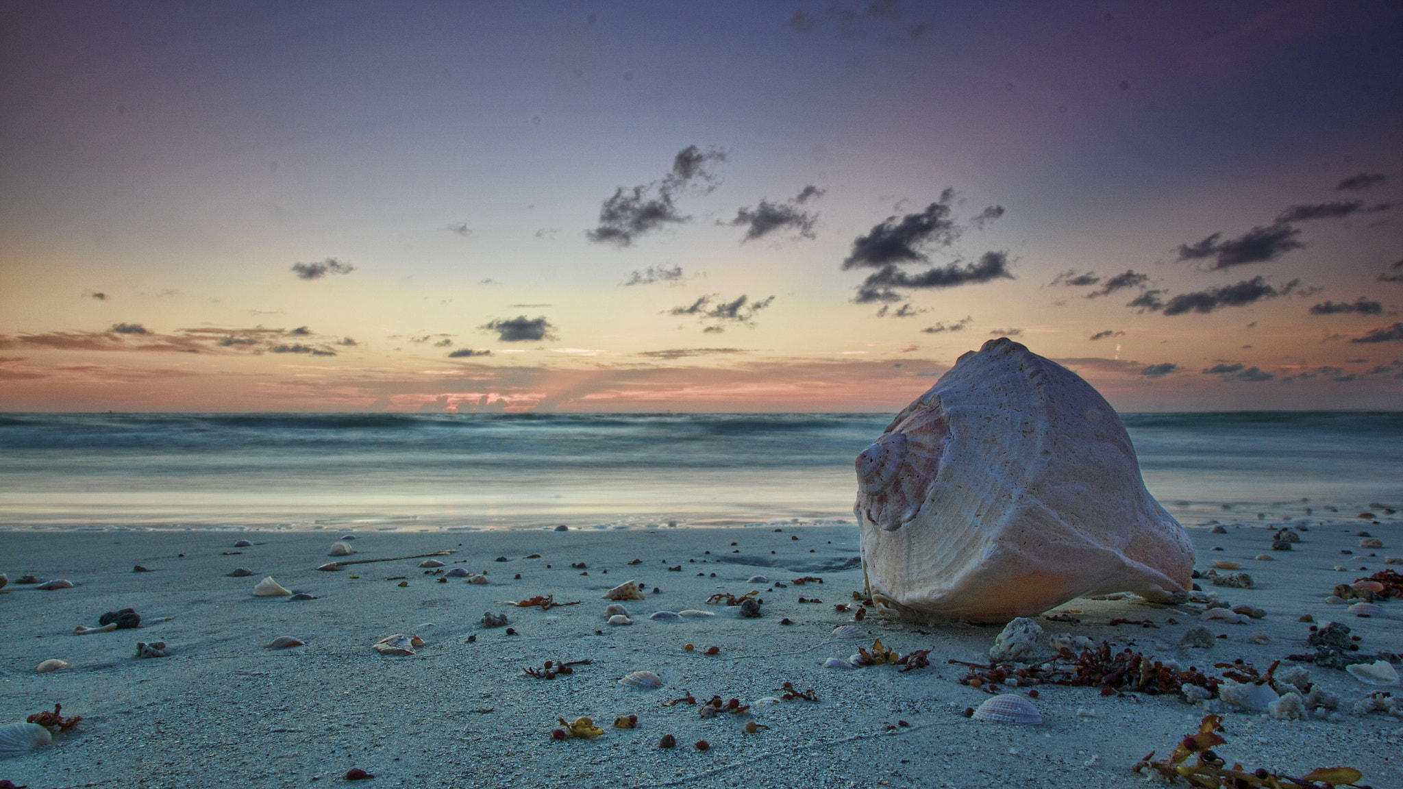 Photograph sea shell by the shore by Parker Mitchell on 500px