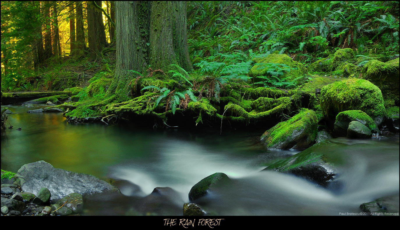 Photograph The Rain Forest by Paul Bratescu on 500px