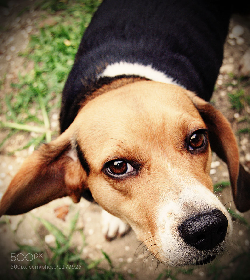 Photograph Look into my eyes by DS Conyers on 500px