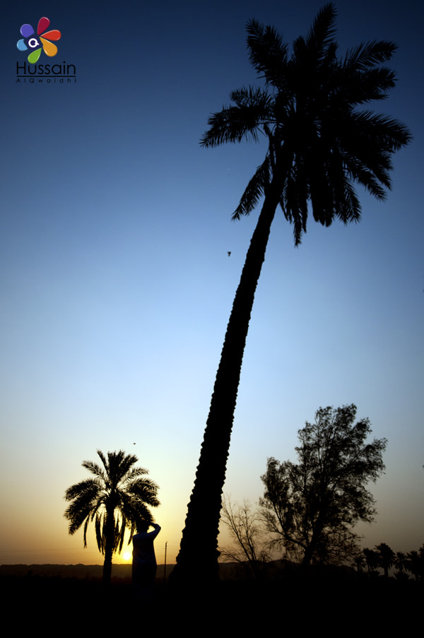 Photograph Silhouette Palm Tree by Hussain Photo on 500px