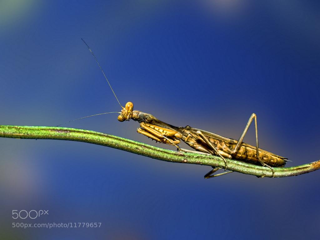 Photograph Mantis by MURAT FINDIK on 500px