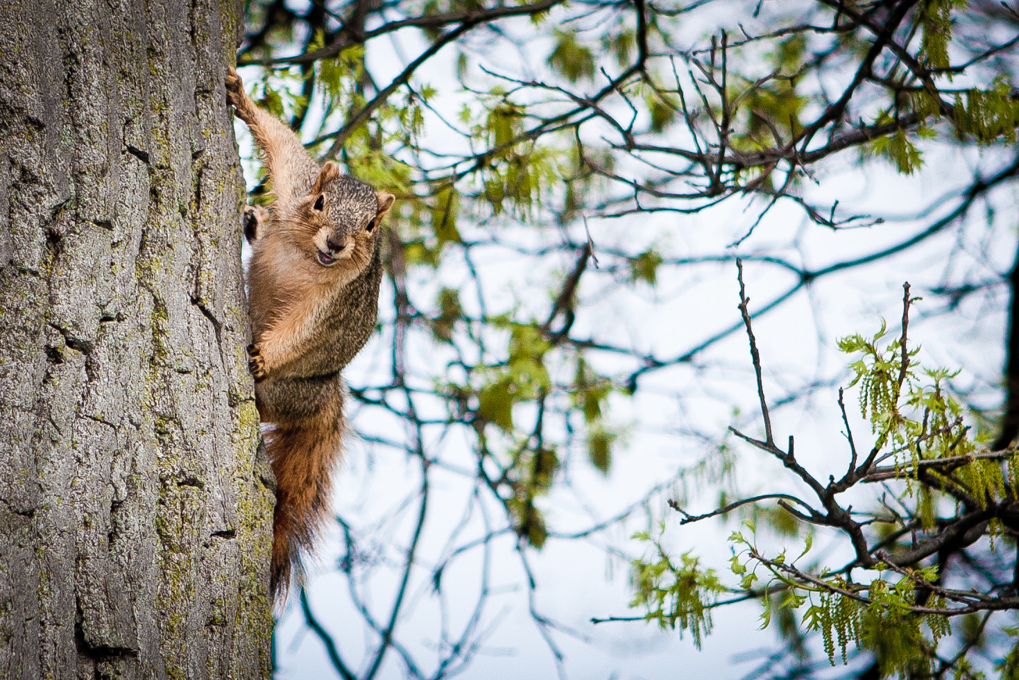 Photograph Squirrelin' Around by Mark Coffman on 500px