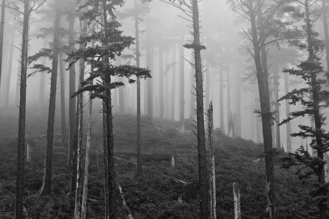 Photograph Mist by Brian Pemberton on 500px