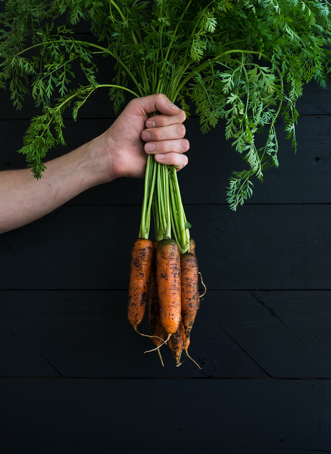 Bunch of fresh garden carrots with green leaves in the hand, black wooden backdrop by Anna Ivanova on 500px.com