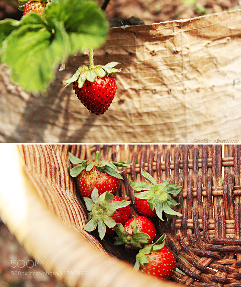 Photograph Fresh Strawberry by Ghaida AlNawwar on 500px