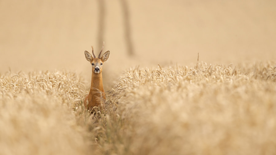 Photograph Yoh! by Mark Bridger on 500px