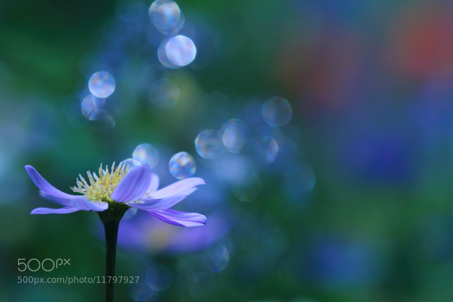 Photograph Hopes and Dreams by Shihya Kowatari on 500px