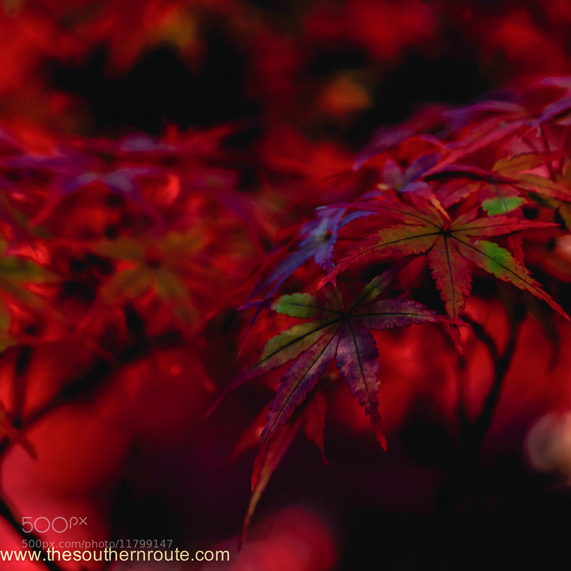 Photograph Cherry merry fancy by regis boileau on 500px