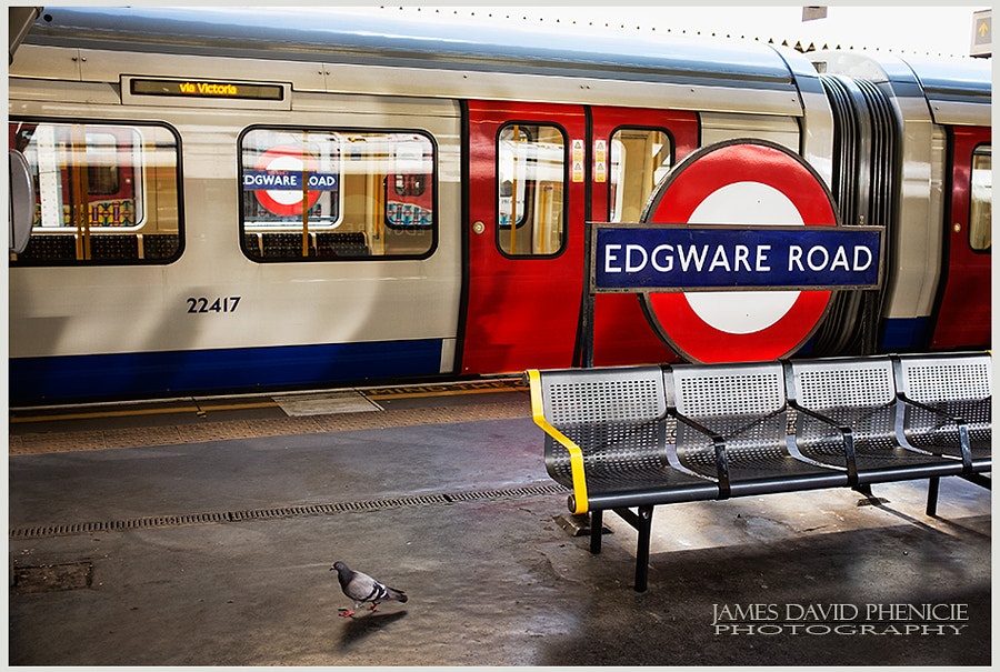 Pigeon at Edgware Road