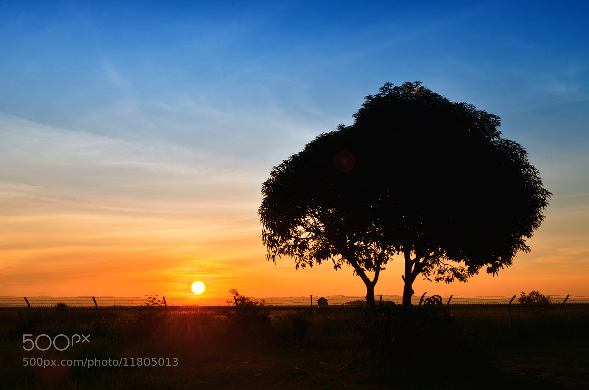Photograph The tree and the sun by Vey Telmo on 500px