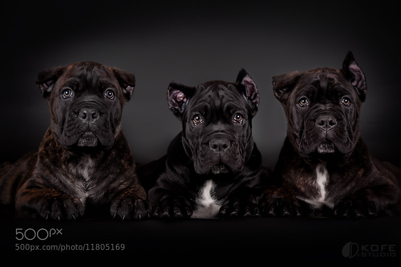 Photograph We are strong :) by Tanya Kozlovsky on 500px