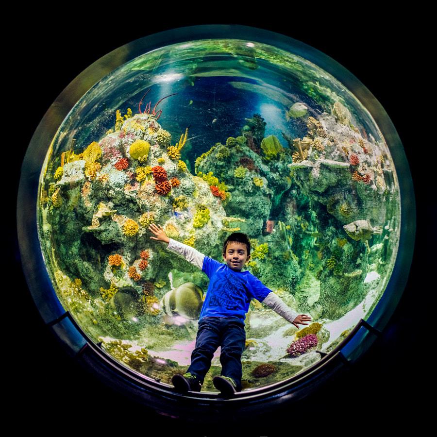 Aquarium Pano Pano Edit Liam in Aquarium