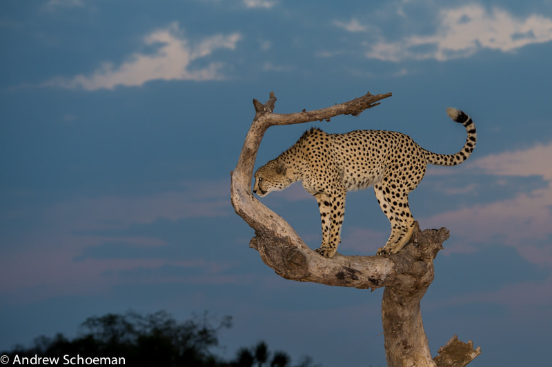 Photograph Up High by Andrew Schoeman on 500px