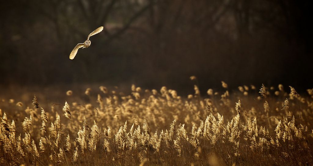 Photograph dusk by Mark Bridger on 500px