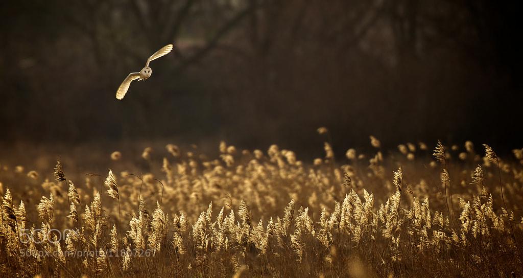 Photograph dusk by Mark Bridger on 500px