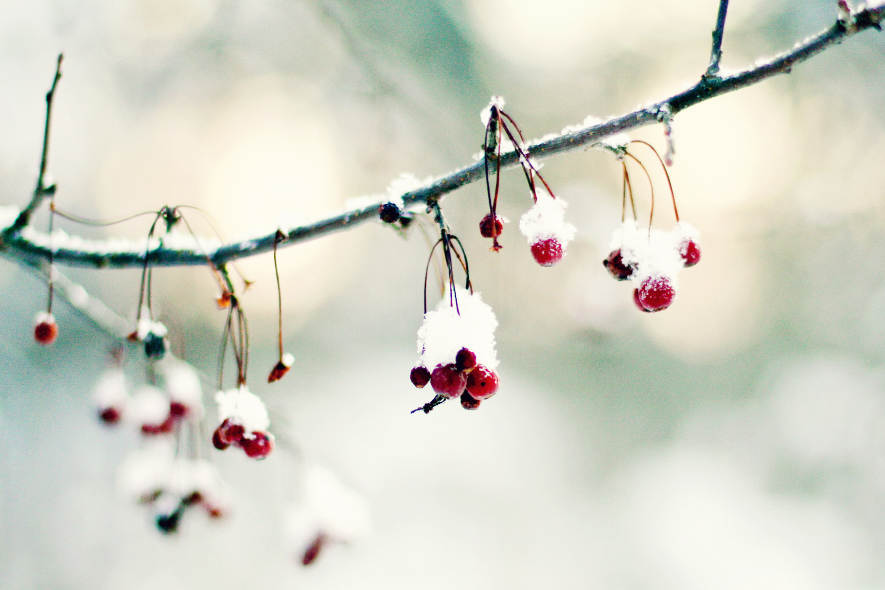 Photograph Rowan in Winter by Minna R on 500px