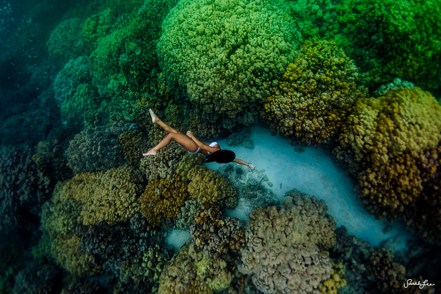 in the lungs of the sea by Sarah Lee on 500px.com