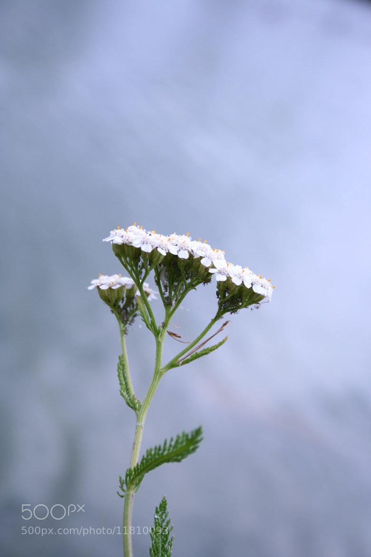 Photograph Ugly Flower  by Tokárszky  Máté on 500px