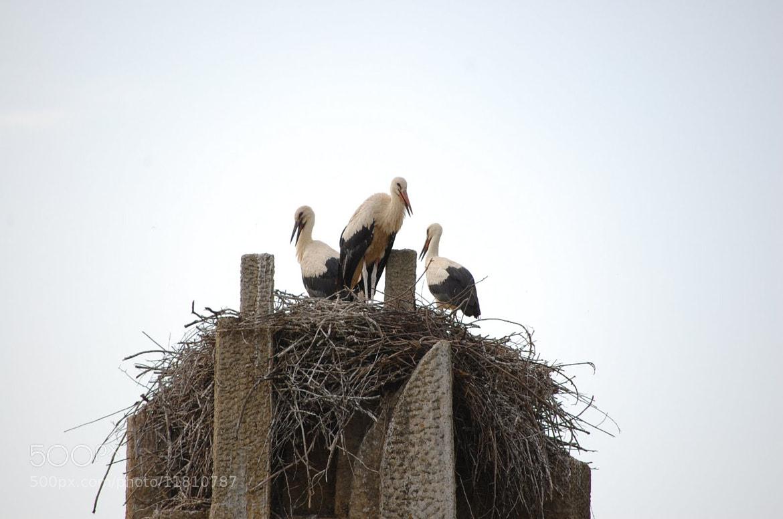 Photograph stork family by Petya Georgieva on 500px