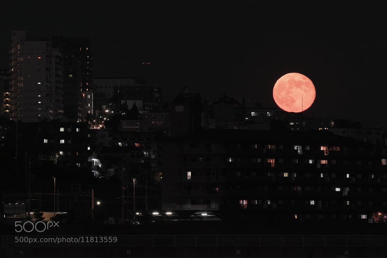 Photograph Blue Moon by halfrain X3 on 500px