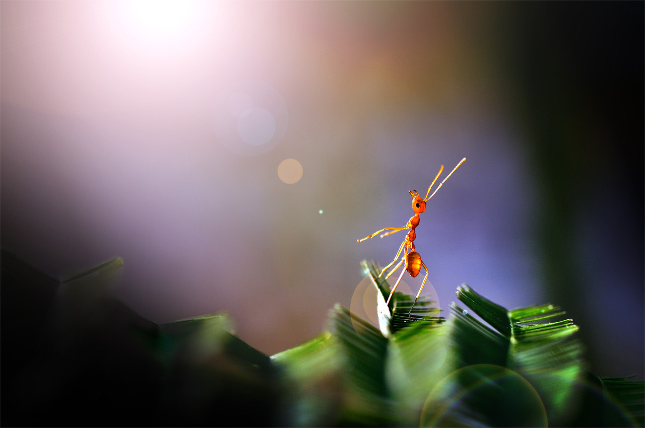 Photograph ANT. by Chanwoot Boonsuya on 500px
