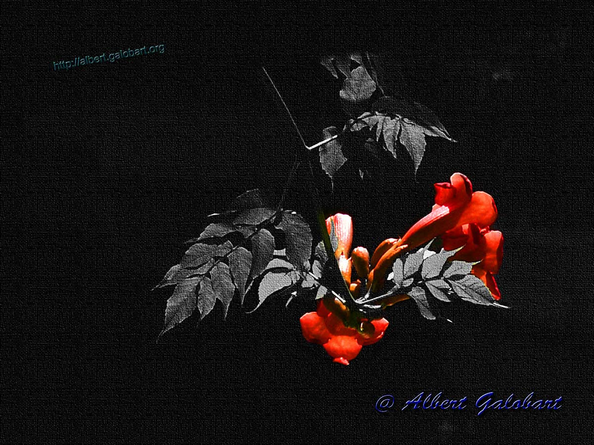 Photograph RED FLOWER by Albert Galobart on 500px
