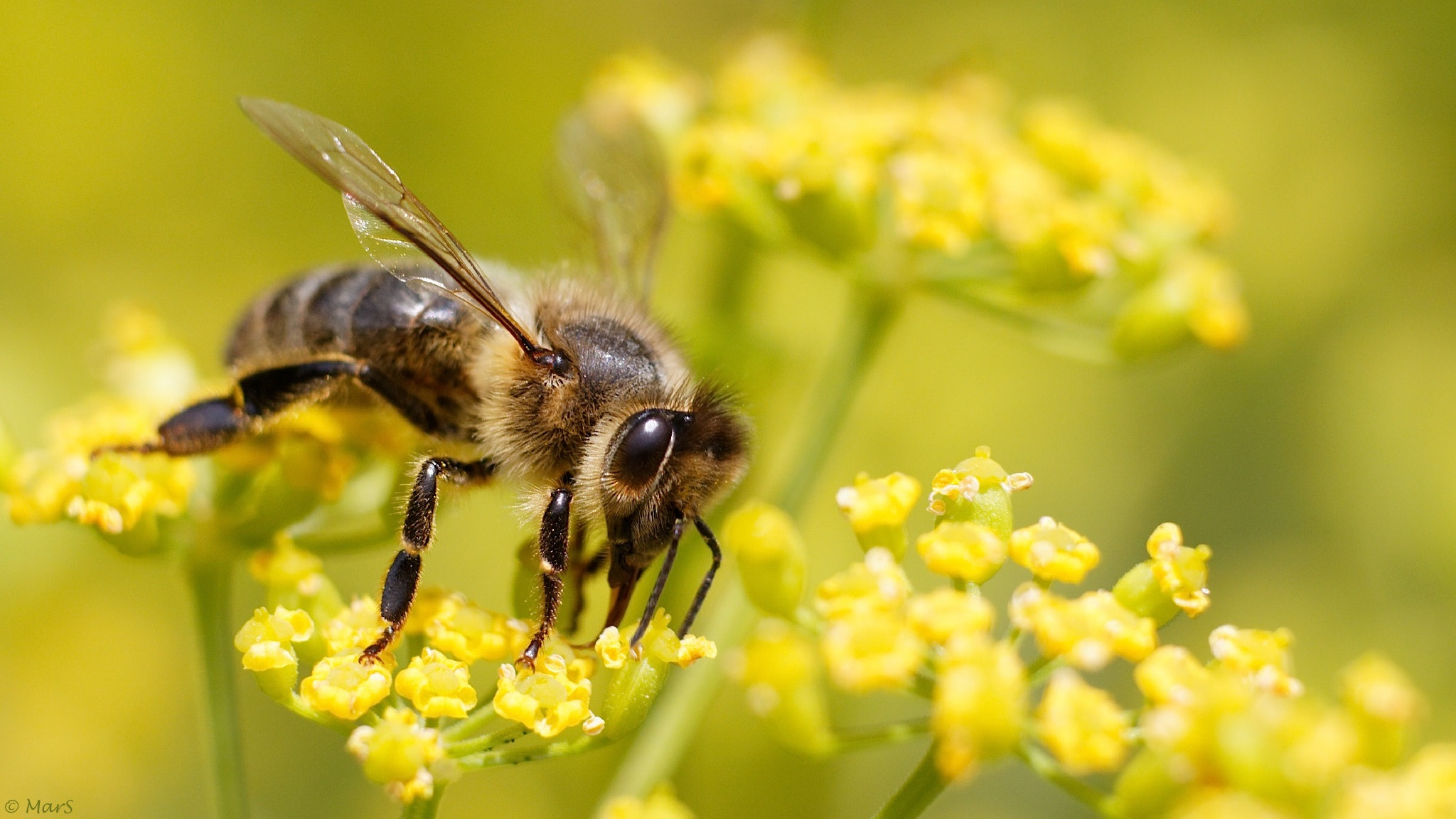 Photograph Let it bee by Sébastien Marchand on 500px