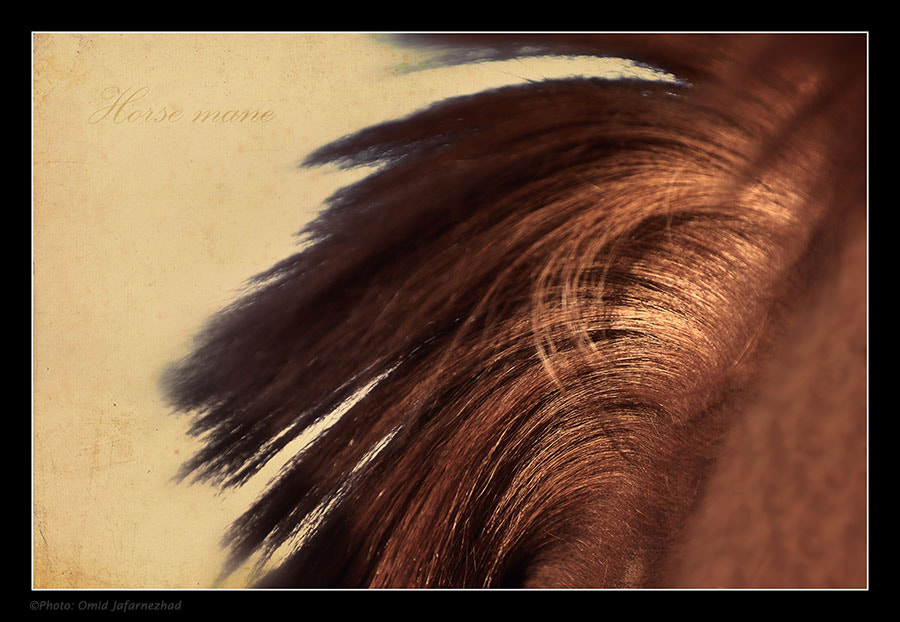 Photograph Horse mane by Omid Jafarnezhad on 500px