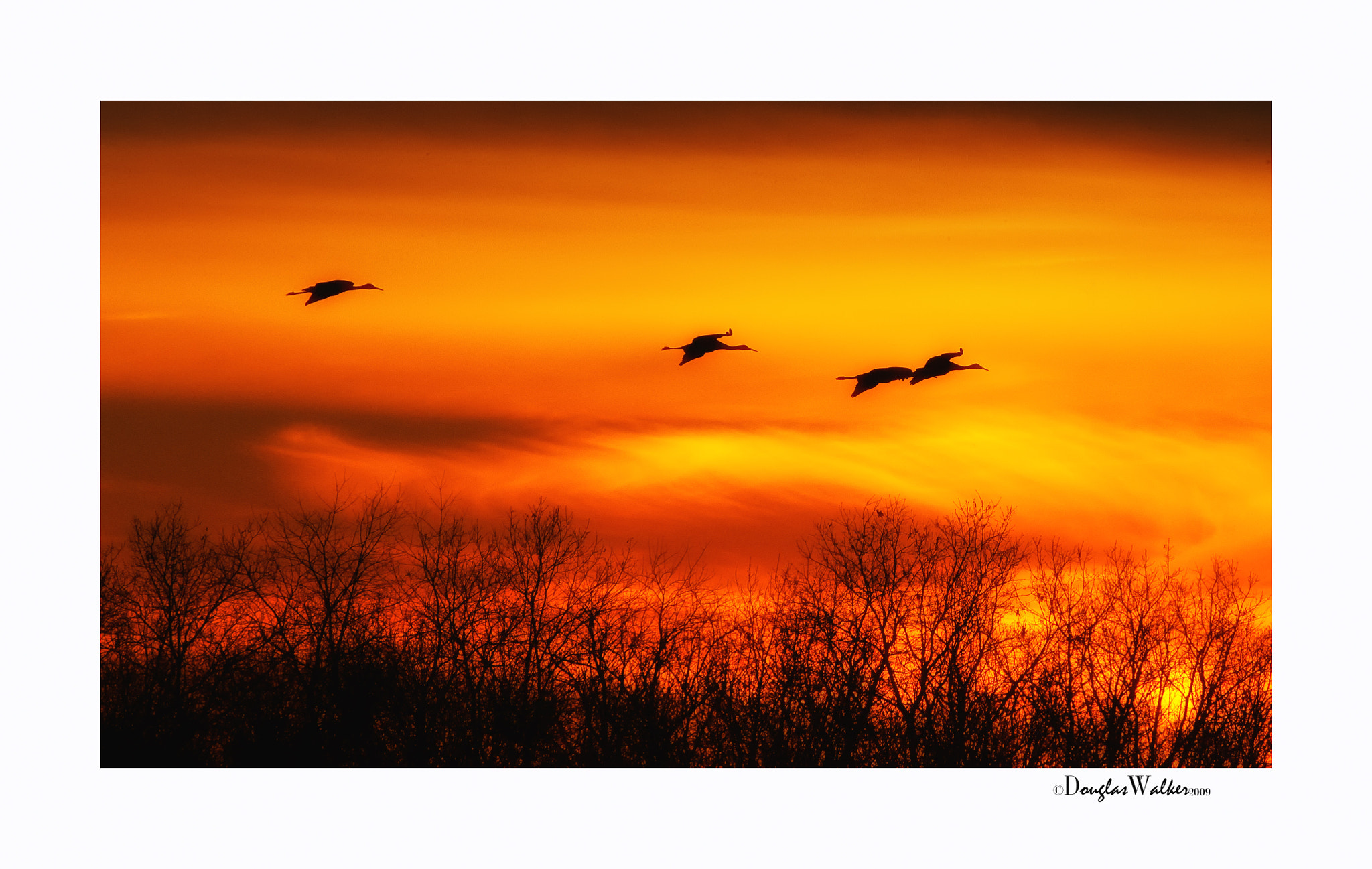 Photograph Sunset with Sandhill Cranes by Douglas Walker on 500px