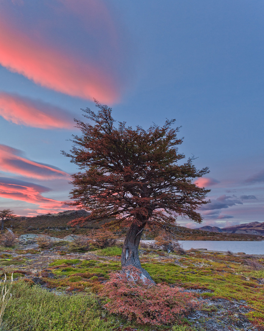 Photograph Lonely Tree by Helminadia Ranford on 500px