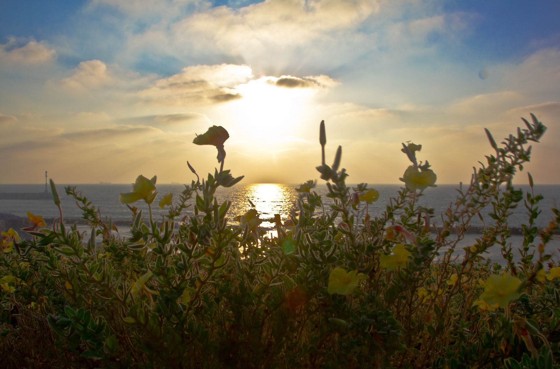 Photograph flowers and a sunset by Evgeni (Евгений) Radko (Редько) on 500px