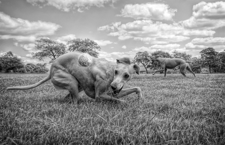 Photograph Brakes On by Hot Dog Photography on 500px