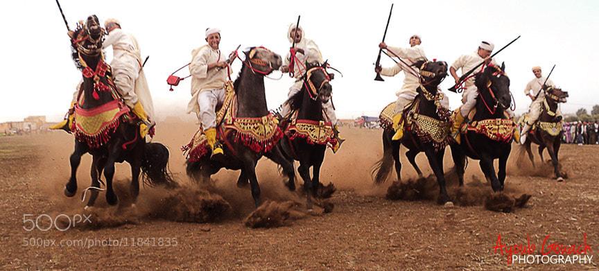 Photograph Arabian Horse by Ayoub Gouach on 500px