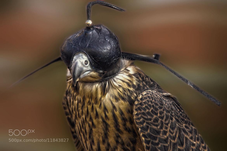 Photograph Aguila by juan  rodrigo legua on 500px