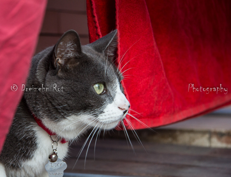 Photograph lucky red by emilio rubio on 500px
