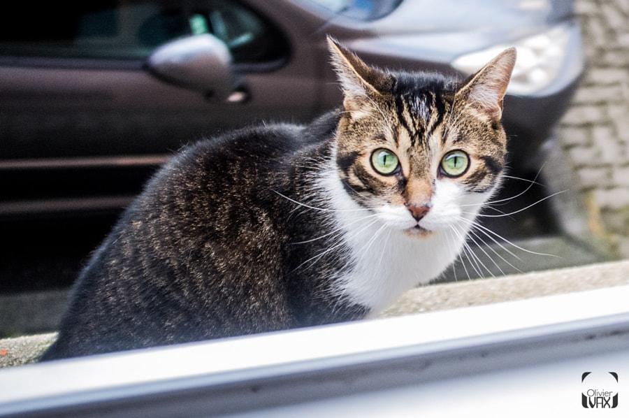 Cat's eye © Olivier Vax
