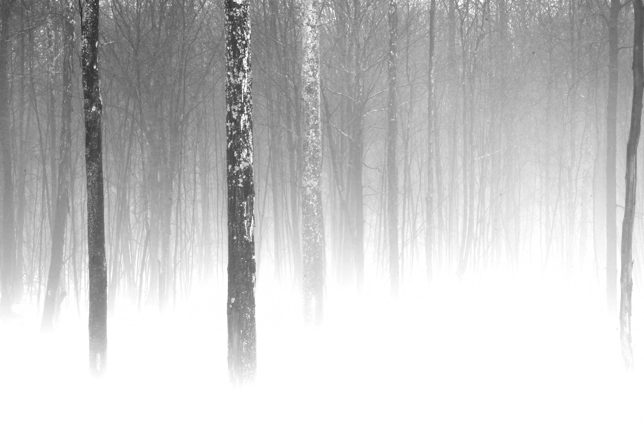 Photograph Trees in Winter Mist by Michael Neil O'Donnell on 500px