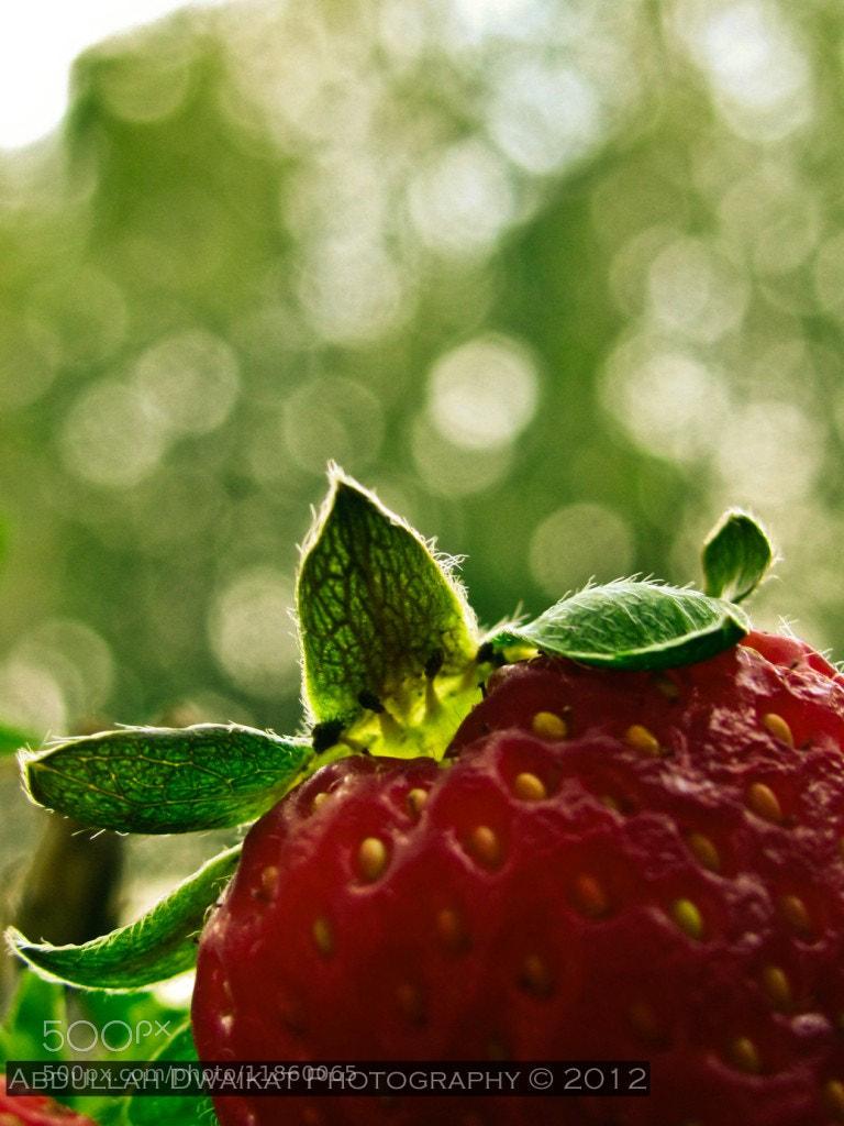 Photograph Strawberry  by Abdullah Dwaikat on 500px