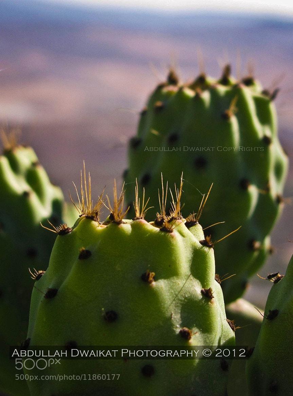 Photograph Aloe  by Abdullah Dwaikat on 500px