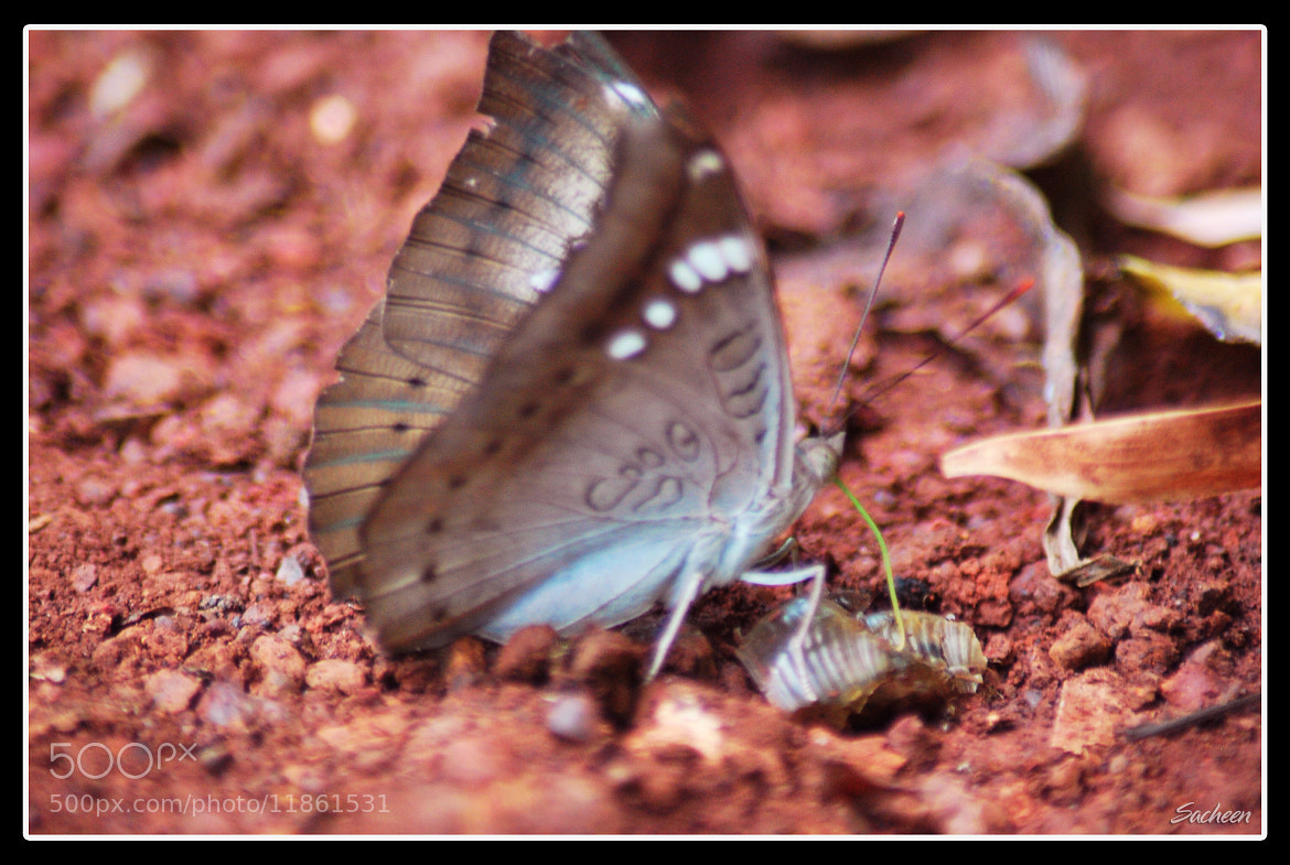 Photograph Om on Butterfly by Sacheen Vaidya on 500px