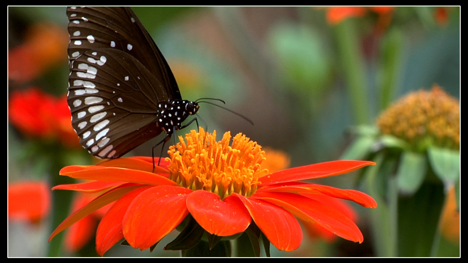 Photograph Brown n Red combination by Sacheen Vaidya on 500px