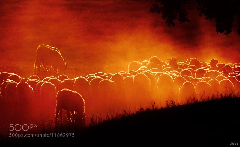 Photograph Sunset ... by Liron Ha on 500px