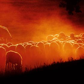 Sunset ... by Liron Hamelnick (LironHamelnick)) on 500px.com