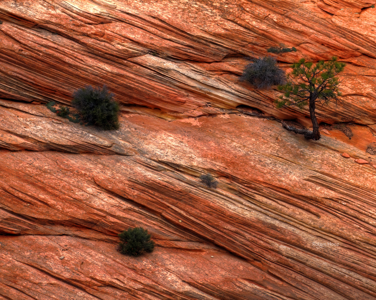 Photograph Wrinkles of the earth, Zion NP by Roberto N. on 500px