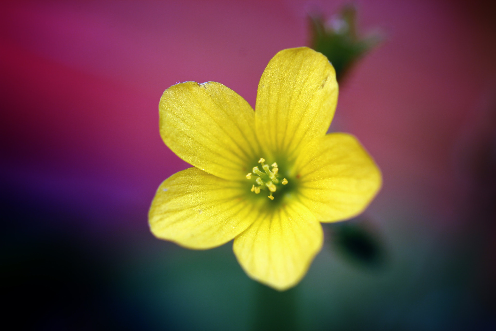 Photograph Lil yellow  by Paul Maillet on 500px