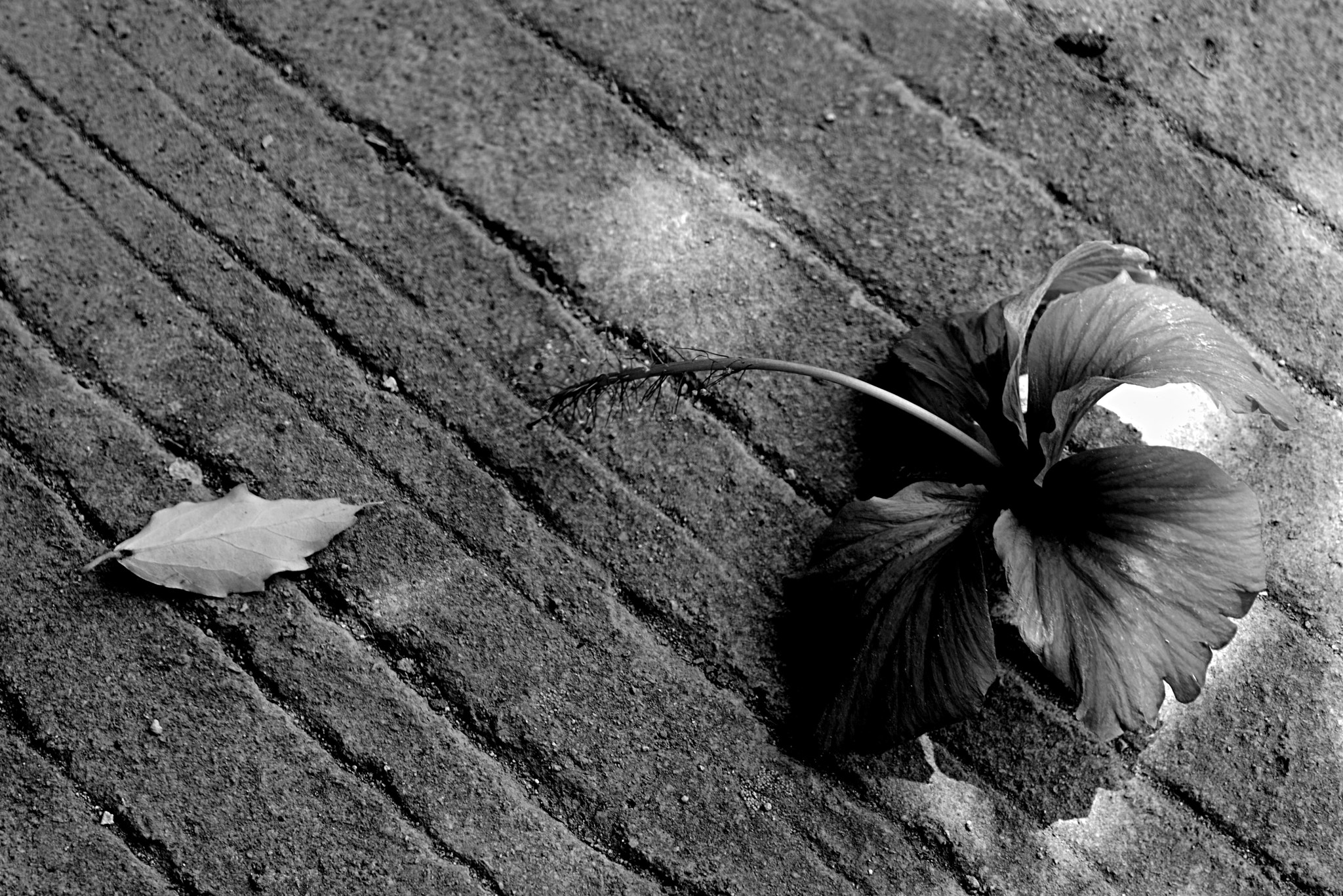 Photograph wasted and wounded on the ground by Sinta Dian on 500px